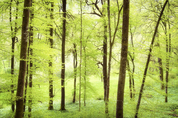 bright-green-forest-in-spring-with-beautiful-soft-light-matthias-hauser