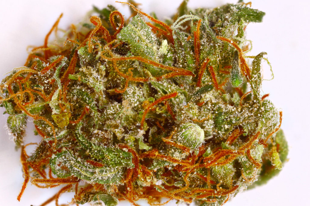 4/20: 10 Of The Best Weed Strains To Party To   6AM
